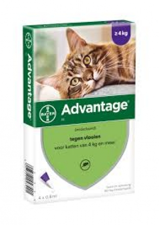 Advantage kat 80 mg 2x 4 pipetten